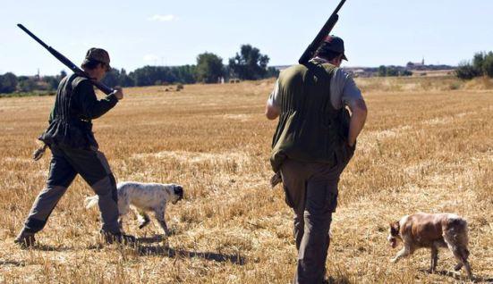 Inicio de la temporada de caza de la codorniz